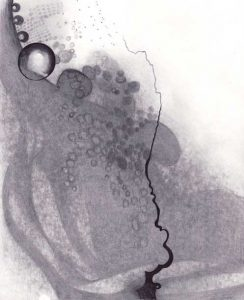 Origin - Graphite on Paper by Shelly Hehenberger